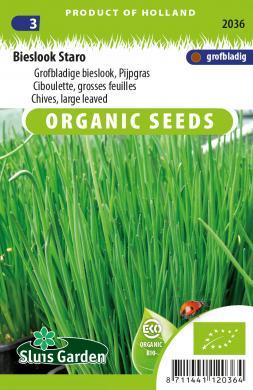 Bieslook grofbladige 'Staro', Allium schoenoprasum Biologisch