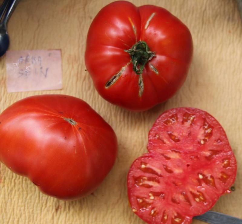 Tomaat vleestomaat 'Arkashin', Solanum lycopersicum