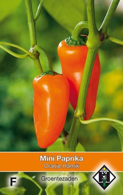 Snackpaprika 'Oranje Hamik', Capsicum annuum