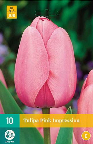 Tulipa darwin hybride 'Pink Impression'