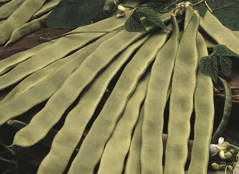 Stoksnijboon 'Algarve', Phaseolus vulgaris