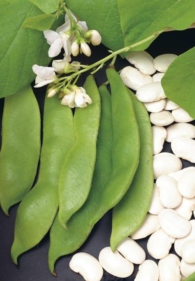 Pronkboon 'Boerentenen', Phaseolus coccineus