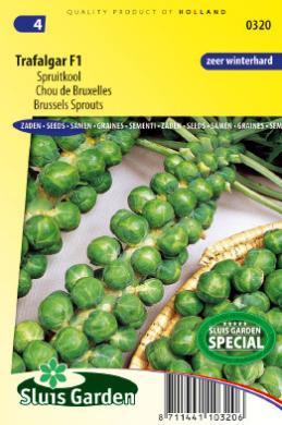 Spruitkool 'Trafalgar F1', Brassica oleracea var. gemmifera