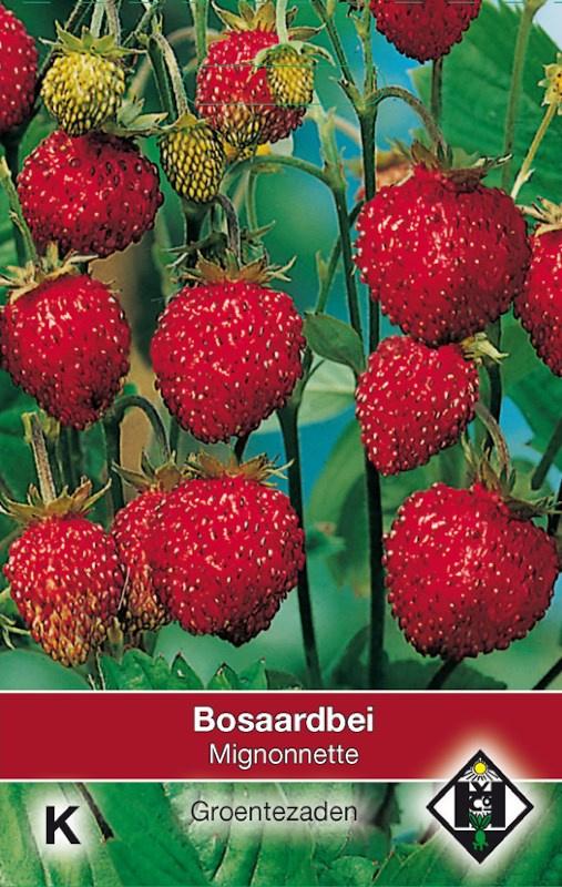 Bosaardbei 'Mignonnette', Fragaria vesca