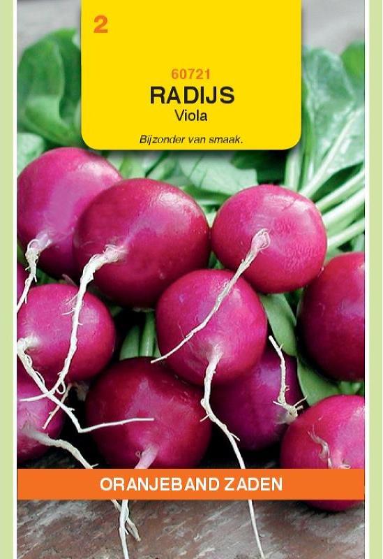 Radijs 'Viola', Raphanus sativus