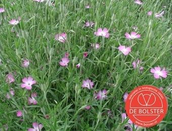 Agrostemma githago, Bolderik Biologisch