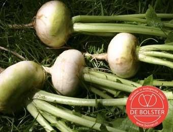 Meiraap 'Platte Witte Mei', Brassica rapa var. majalis Biologisch