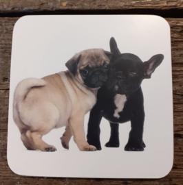 Mops en franse bulldog