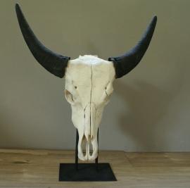 Waterbuffel schedel op standaard