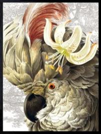 Vanilla Fly Poster - White parrot - 30x40 cm