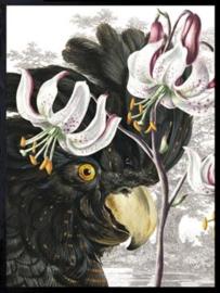 Vanilla Fly Poster - Black parrot - 30x40 cm