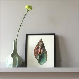 Vanilla Fly Poster - Rood Groene schelp - 20x25 cm