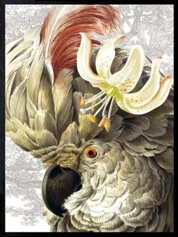 Vanilla Fly Poster - White parrot - 30x40 cm B-keuze
