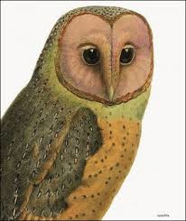 Vanilla Fly Poster - Red Faced Owl - 30x40 cm