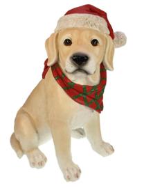 Labrador met kerstmuts