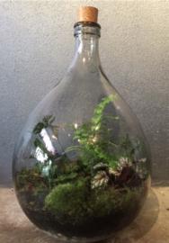 Ecosysteem 34 liter