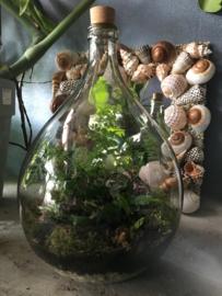 Ecosysteem 15 liter