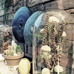 Decoraties-van-natuurlijk-materiaal-bij-Floribundus-in-Zaandam-en-Amersfoort