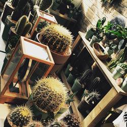 Cactussen  bij Floribundus in Zaandam