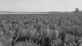 H123 --16mm--Hoogte punten uit Nederland uit de jaren 50/60 (Highlight of Holland) mooie zwartwit journaal van Polygoon Holland produktie, heeft  Engels commentaar, speelduur ca.20 minuten op spoel en in doos
