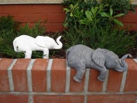 S 2353 Slapende olifant