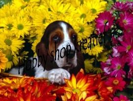 PE 1214 Hondje tussen bloemen