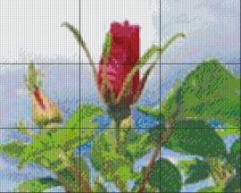 Bloemen / stilleven