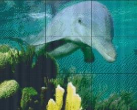 PE 0087 Dolfijn