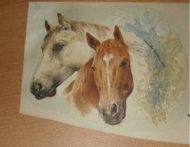 Transfer: Witte en bruine paardenkoppen