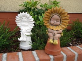 D 1429 Sunflowerbaby praying