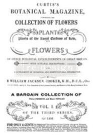 re-design decor transfers botanical magazine