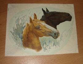 Transfer: Zwarte en ros witte paardenkoppen GR