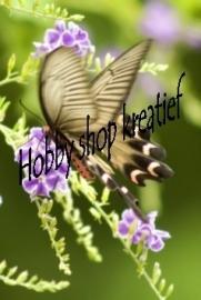 SS 0217 vlinder op tak