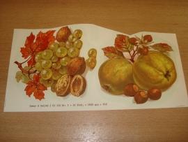 Transfer: Fruit druiven noten - appel noten