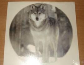 Transfer: Wolf