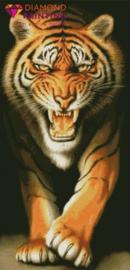AB Grote tijger