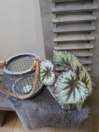 Kunst tak blad begonia