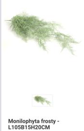 Grote bos varen grijs/groen