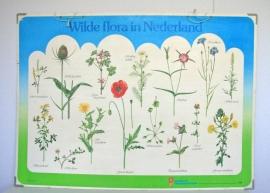 Botanische prent Wilde flora in Nederland