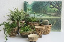 Botanische sferen