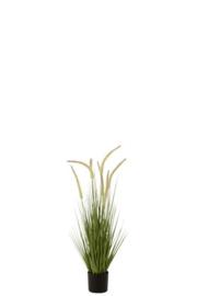 Grassen+Staarten In Pot Plastiek Groen
