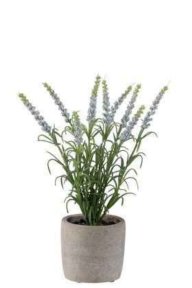 Lavendel In Pot Plastiek Licht Paars