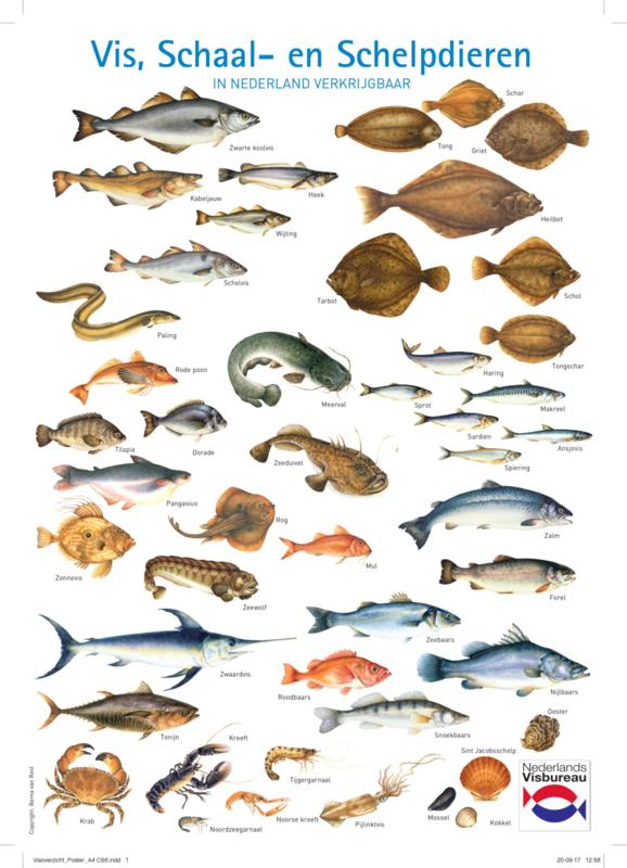 A4 flyer vis, schaal- en schelpdieren in Nederland verkrijgbaar (100 stuks)