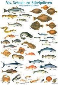 Wandplaat vis, schaal- en schelpdieren in Nederland verkrijgbaar