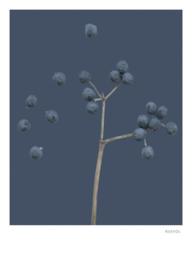 Blauwe bes