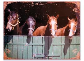Vier paarden in een stal
