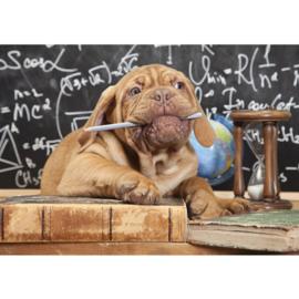 Fotobehang poster 3336 dieren hond bordeaux dog potlood schoolbord puppy