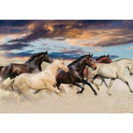 Fotobehang poster 2141 dieren paarden bruin en wit