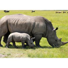 Fotobehang poster 2554 dieren neushoorn big five safari
