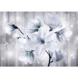 Fotobehsang poster 1285 bloemen magnolia parels